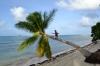 пальма острова Даку