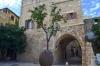 дерево апельсина в Яффо