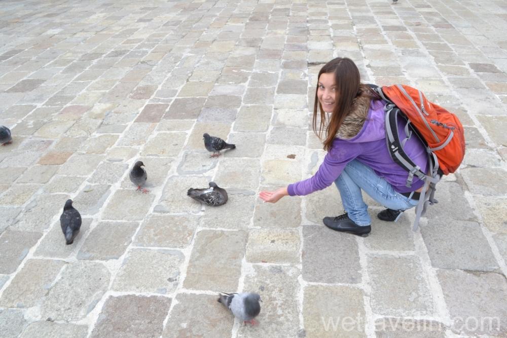 венецианские голуби