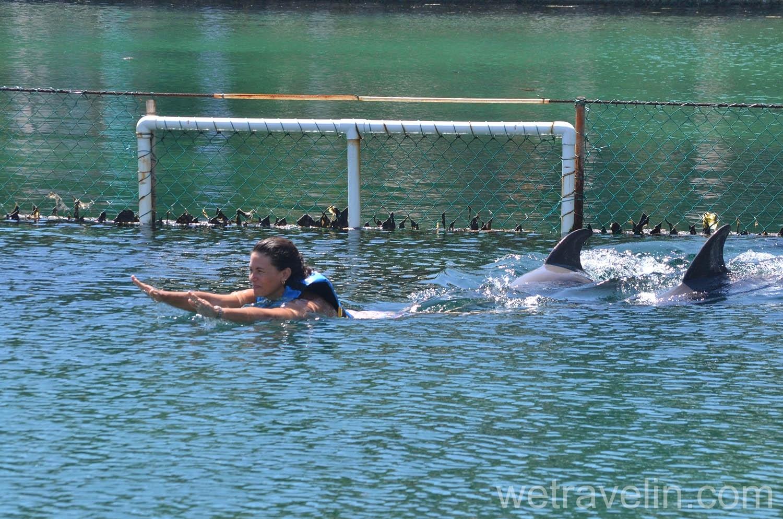 дельфины в Пуэрто Авентурас