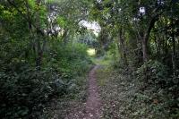бесплатная тропинка в Эк Балам