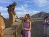 экскурсия к верблюдам в Эмиратах