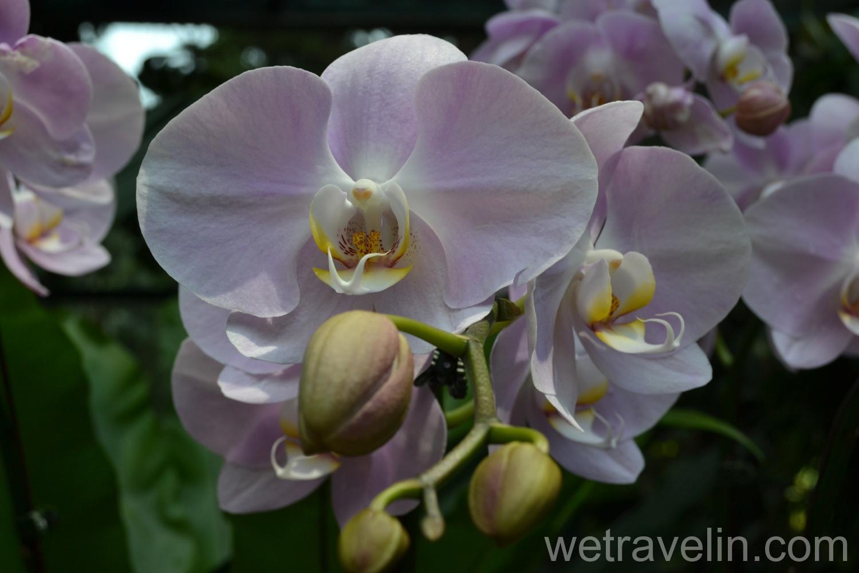 сад орхидей в парке Сингапура