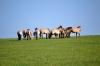 кони пржевальского