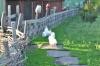 курица в заповеднике Гайчур