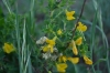 травы заповедника Гайчур