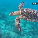 Акумаль или дом черепах