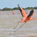 Рио Лагартос и как увидеть фламинго бесплатно